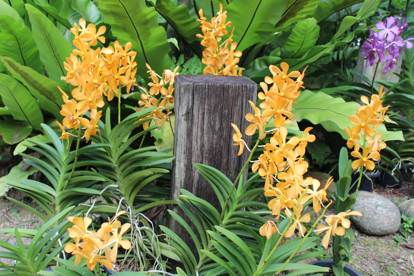 The Small, But Incredibly Beautiful Orchid Garden Occupies A Territory Of  Just One Hectare. However, In This Compact Space Are More Than Six Thousand  ...